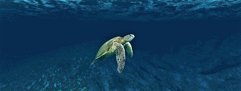 fauna submarina mexico