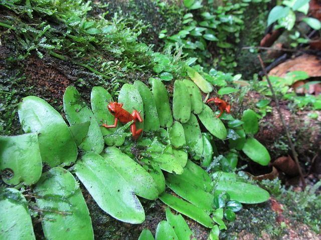 fauna junglas costa rica