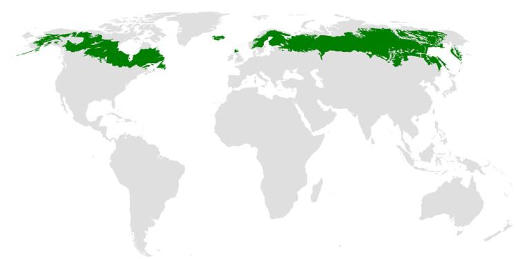 mapa taiga canada bosque